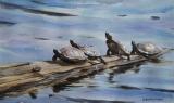 Olga Zakharova Art - Animals - Turtles Quartet