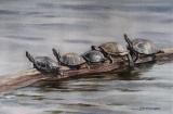 Olga Zakharova Art - Animals - Turtle quintet