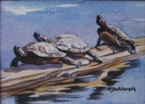 Olga Zakharova Art - Animals - Turtle Trio