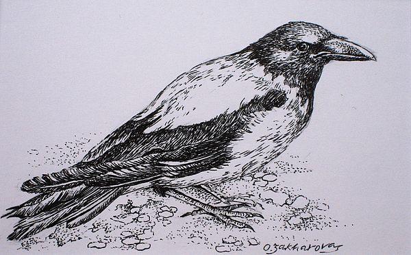 Thinking Crow