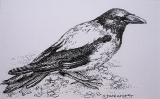 Olga Zakharova Art - Animals - Thinking Crow