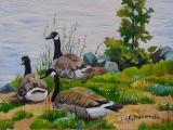 Olga Zakharova Art - Animals - Canadian Gooses