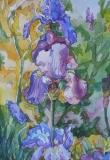 Olga Zakharova Art - Floral - Irises