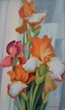Olga Zakharova Art - Floral - Iris