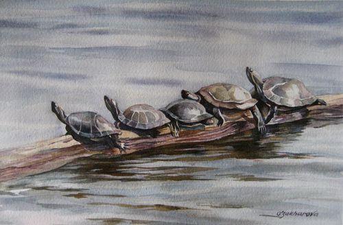 Turtle quintet